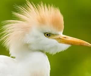 鸟营养不良