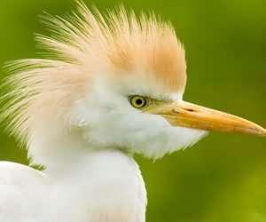 预防鸟营养不良及症状治疗